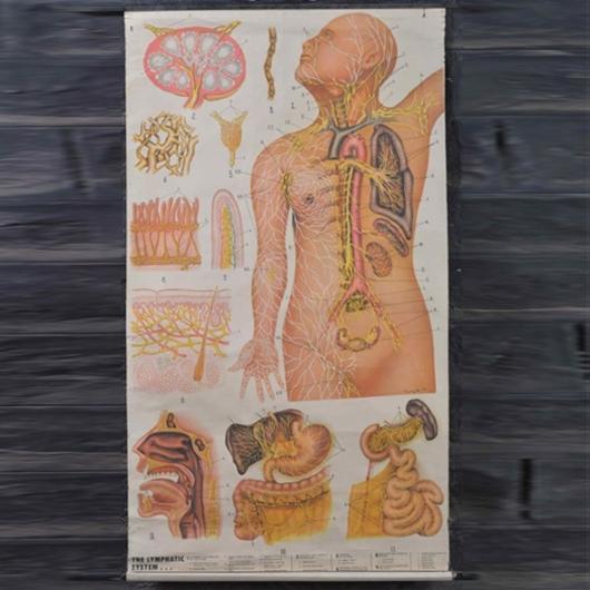 Medical engraving (various models)