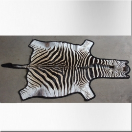 Burchell zebra skin with black protected underfelting