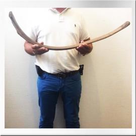 Mammoth rib