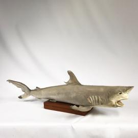 Requin naturalisé