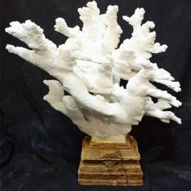 Corail branche