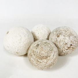 Boule fossile corail blanc